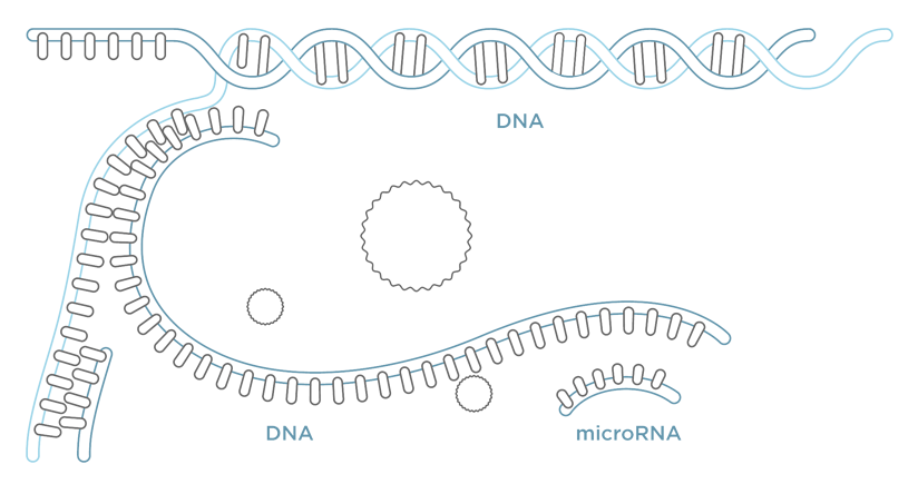 miroculus_RNA